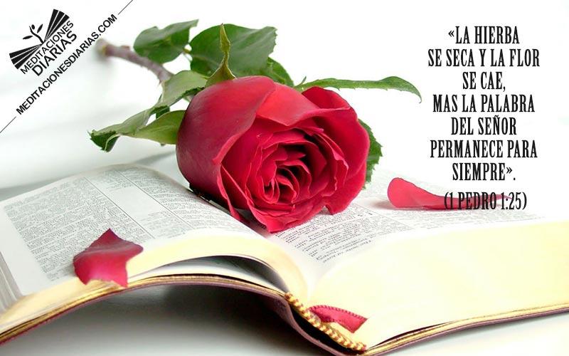La palabra del Señor permanece para siempre