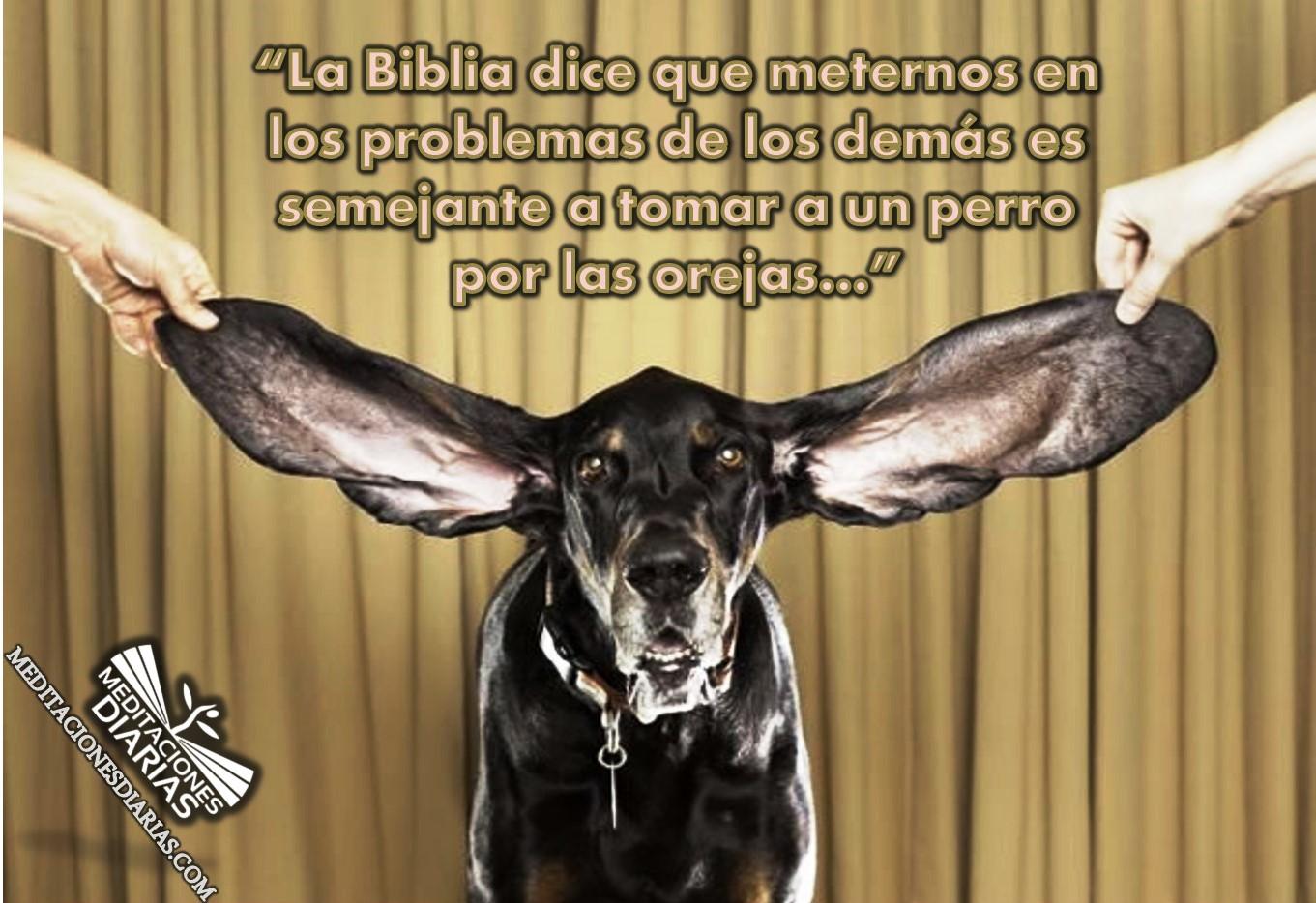 Las orejas de los perros