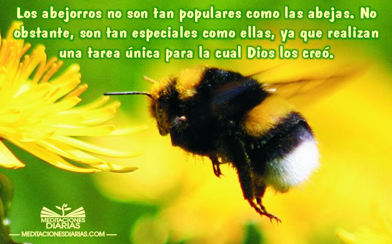 La importancia del poco popular abejorro