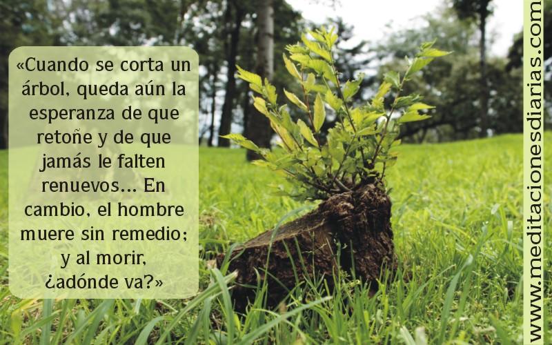 Si un árbol cae