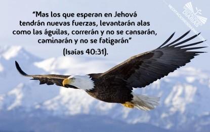 Volar más alto