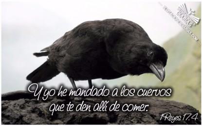 El Cuervo de Tambilahan