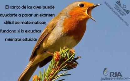 Las Aves y tus Exámenes