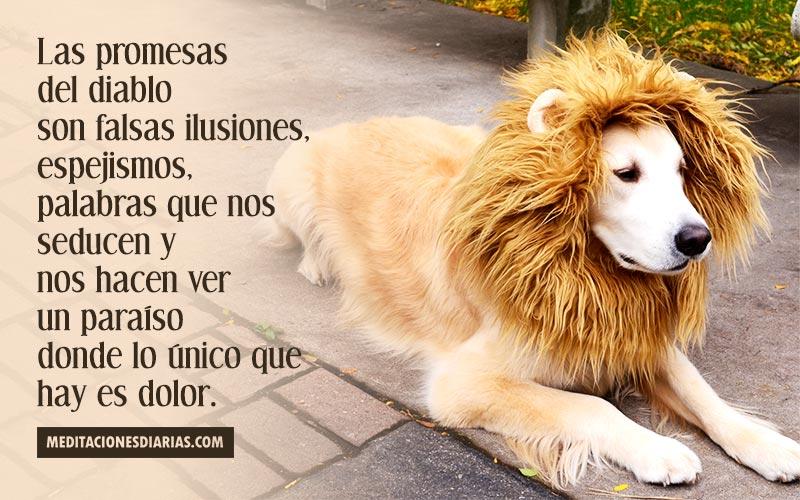 El león no es más que un perro