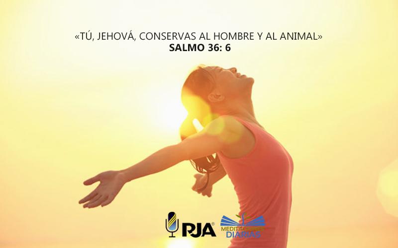 Dios cura a los animales también