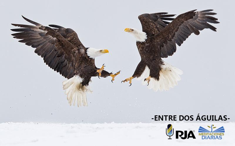 Entre dos águilas
